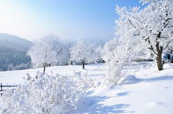 Garten Im Winter baum und garten winter